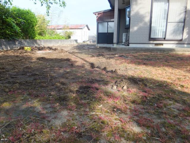 古い芝生を剥がし終えました