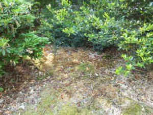 苔 除草剤散布3週間