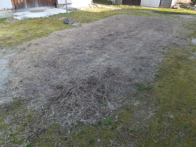 裏庭の芝生 2019年3月